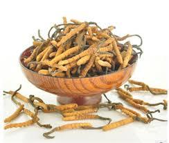 Cordyceps Herb for Emphysema