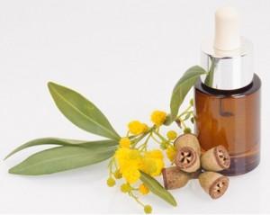 Tea Tree and Eucalyptus Oil